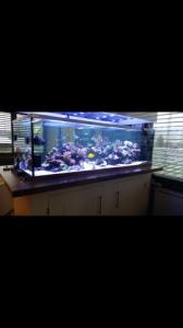 aquarium sur . mesure