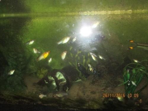 Aquarium avec poissons et meuble for Aquarium avec poisson