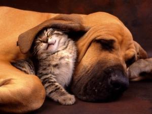 Garde / animaux-sitting avec tendresse