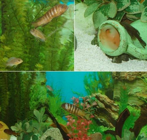 3 aquariums complets avec poissons for Aquarium avec poisson