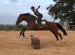 pension chevaux en écurie de mouvement