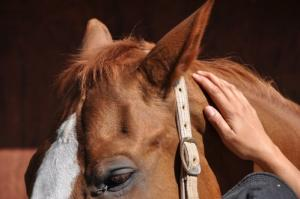 Massages pour les chevaux