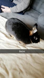 Un lapin nain Rex 79.- + une grande cage