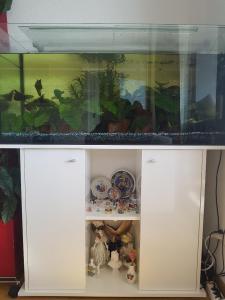 Aquarium 180l +meuble+poissons+nouriture