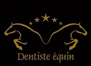 Dentisterie équine - Dentiste équin