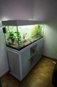 Aquarium 250l, EHEIM 4+ et co2 JBL m601