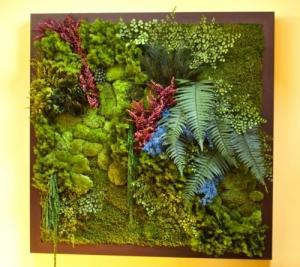 De magnifiques murs végétaux stabilisés