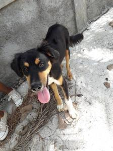 NASKY, jeune chien croisé NON LOF