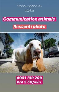 Communication animal Fr/It